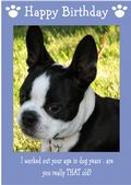 "Boston Terrier-Happy Birthday - ""Are You Really THAT Old"" Theme"